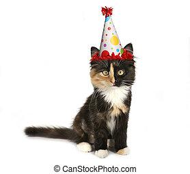adorável, aniversário, fundo, gatinho, chapéu branco