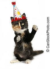 adorável, gatinho, ligado, um, fundo branco, com, chapéu aniversário