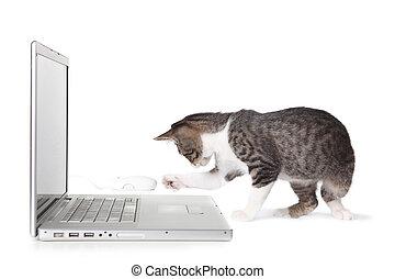 adorável, gatinho, usando computador portátil, computador