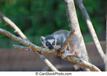 Adorable Baby Lemur Sitting in a Dead Tree