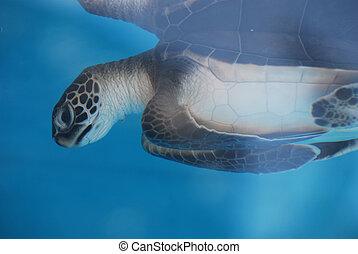 Adorable Baby Sea Turtle Underwater