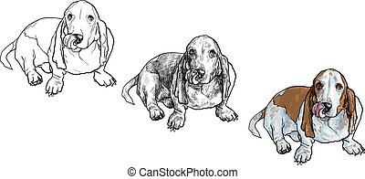 basset hound dog sitting and stick out it's tongue -...