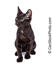 Adorable Black Kitten Sitting Looking to Side
