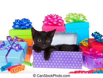 Adorable black kitten surprise party isolated