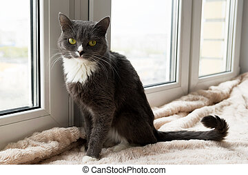 Adorable blue-white cat with green eyes is sitting on a pink blanket near to the window.