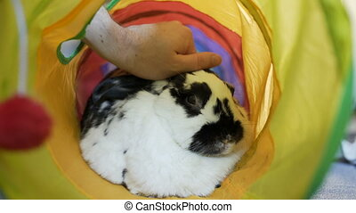 Adorable Bunny Being Pet In A Tube - This Adorable Mini-Lop...