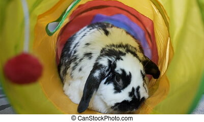 Adorable Bunny Eating in A Tube - This Adorable Mini-Lop...