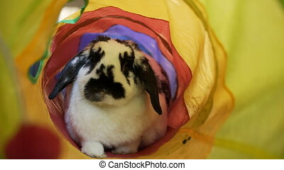 Adorable Bunny In A Tube - This Adorable Mini-Lop eared...