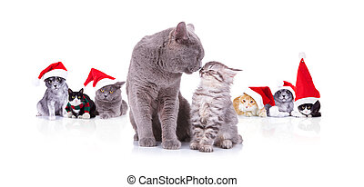 adorable cat couple sharing love in front of santa cats
