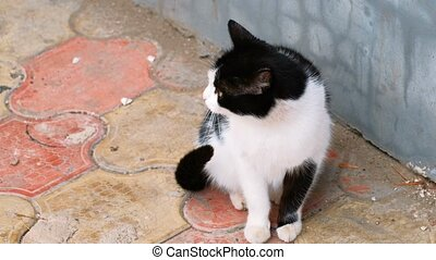 Adorable Cat Sitting Near The Wall