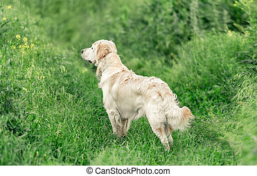 Adorable dog standing in green grass