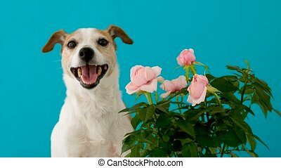 Adorable dog with flowers on blue background - Funny little ...