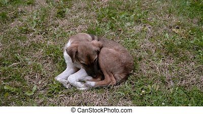 Adorable feral puppy dog resting on the backyard on the...