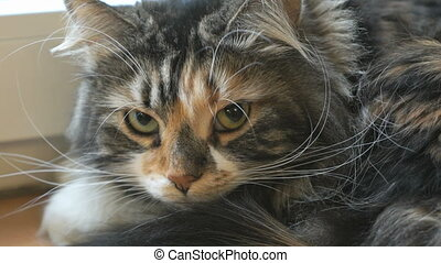 Adorable fluffy cat looking at the camera