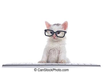 adorable fluffy white kitten wearing black geeky glasses over keyboard