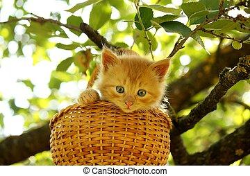 Adorable ginger kitten sitting in the basket in summer