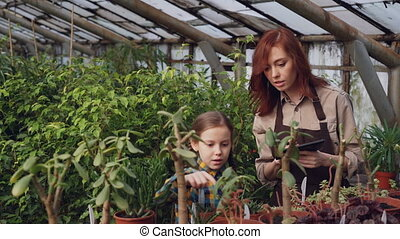 Adorable girl is helping her mother in greenhouse counting pot plants while her mom is working with tablet and speaking with daughter. Farming and family concept.