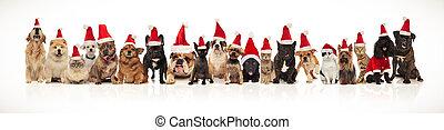 adorable group of many christmas pets wearing santa hats...