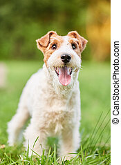Adorable happy fox terrier dog at the park - Vertical shot...