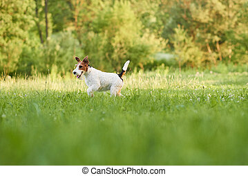 Adorable happy fox terrier dog at the park - Shot of an...