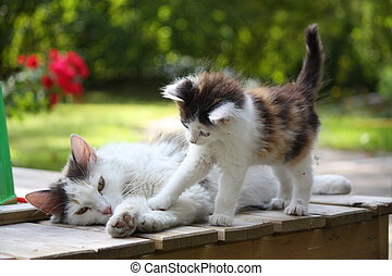 Adorable kitten resting with his mother in the garden