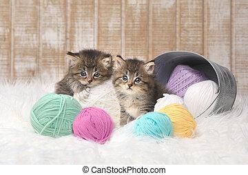 Kittens With Balls of Yarn in Studio
