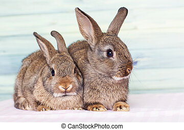 Adorable little baby rabbits on a pink - blue background