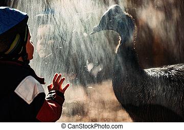 Adorable little boy in zoo mesmerized by cassowary