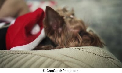 Adorable little dog in red jacket is lying on bed and...