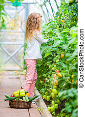 Adorable little girl harvesting in greenhouse. Cute kid with the big tomato in hands