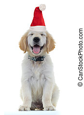 adorable little golden retriever puppy dog wearing santa claus hat for christmas is blinking