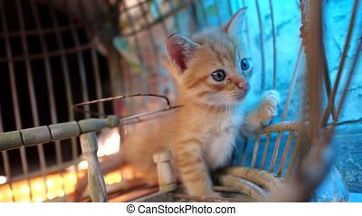 Adorable little kitten - Small adorable ginger kitten with...