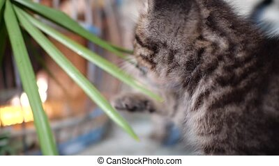 Adorable little kitten - Small adorable gray kitten with...