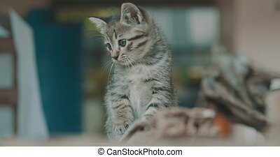 Adorable little kitten - Small adorable kitten with blue...