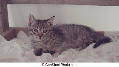 Adorable little kitten - Small adorable kitten with blue...