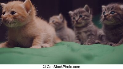 Adorable little kittens indoors - Small adorable kittens on...