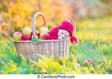 Adorable newborn baby in a big basket with apples in a garden on