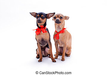 Adorable pedigree dogs with red bows.