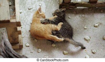 adorable, peu, chatons
