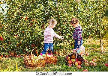 adorable, pomme, soeurs, ferme, jardin