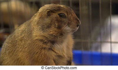 Adorable prairie dog petting cage - Adorable prairie dog...