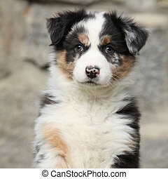 Adorable puppy looking at you