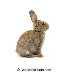 Adorable rabbit isolated on white