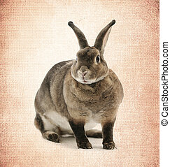 Adorable rabbit on  old paper