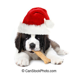 Adorable Santa Clause Saint Bernard Puppy - Christmas Santa...