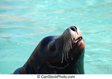 Adorable Sea Lion Poking His Nose Out of the Water