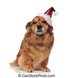 adorable seated brown dog with santa cap ready for Christmas
