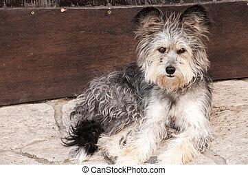 Adorable shaggy dog - Likeable shaggy stray dog on stone...