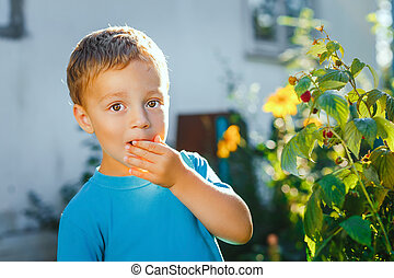 Adorable small boy eats raspberries