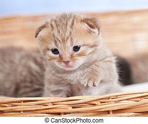 Adorable small kitten in wicker basket